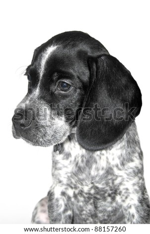 portrait of a puppy dog isolated over white