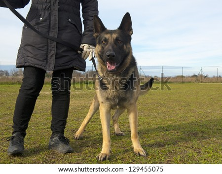 portrait of a  purebred german shepherd and owner outdoors