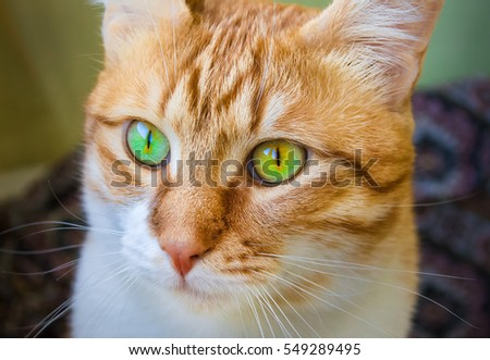 Portrait of a red cat close-up
