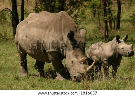 Portrait of a Rhino - stock photo