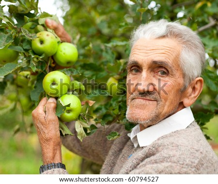 Portrait of a senior farmer checking the apples in his orchard