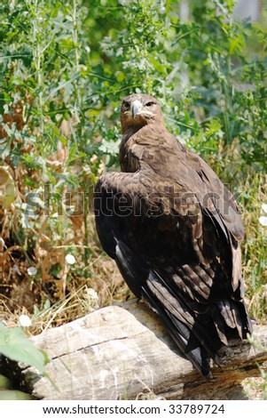 Portrait of a sitting eagle in a bright sunny day - stock photo