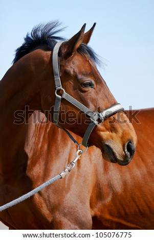 Portrait of a sports horse against the sky - stock photo