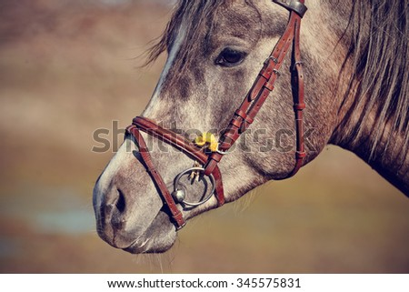 Portrait of a sports horse in a bridle. - stock photo