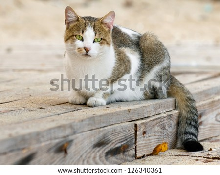 Portrait of a spotted cat, closeup - stock photo