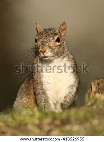 Portrait of a Squirrel - stock photo