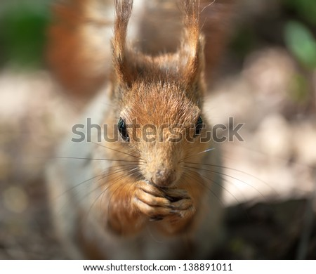 Portrait of a squirrel in the wood. sharp eyes, other is small Depth of Field