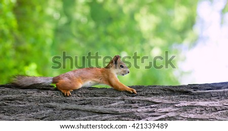 portrait of a squirrel on the trunk tree closeup - stock photo