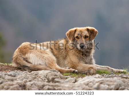 Portrait of a stray dog outdoors with shallow depth of field - stock photo