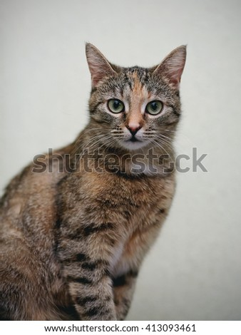 Portrait of a striped cat with white moustaches - stock photo
