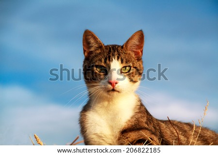 Portrait of a stripey cat with yellow eyes - stock photo