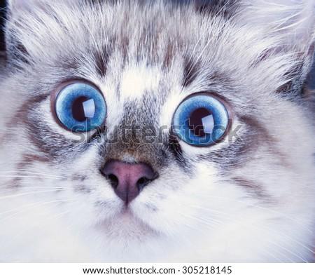 Portrait of a surprised cat - stock photo