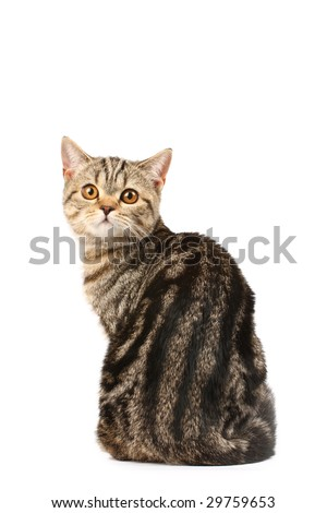 Portrait of a tabby cat - stock photo