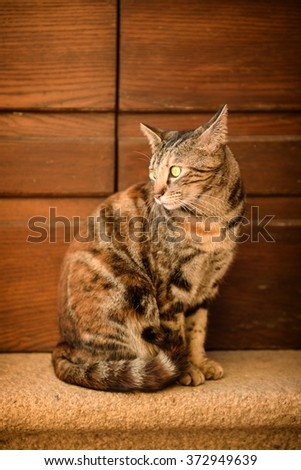 Portrait of a tabby street cat with green eye sitting near wall and looking, animal natural background - stock photo
