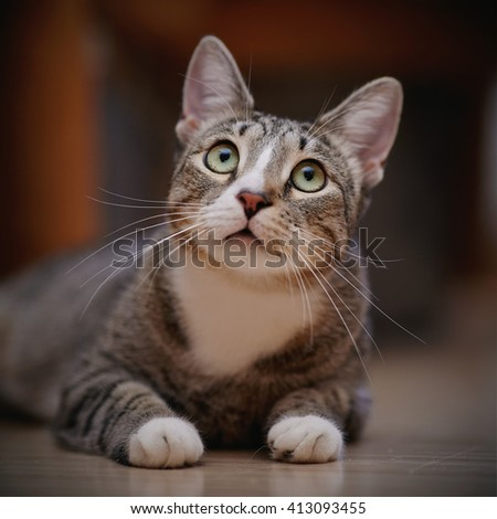 Portrait of a thoughtful striped cat with green eyes. - stock photo