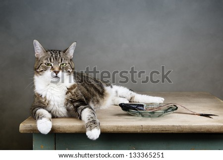 Portrait of a three colored housecat sitting on table with an eaten herring looking satisfied and well fed - stock photo