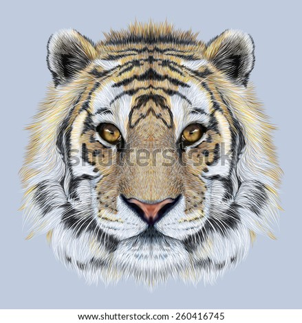 Portrait of a Tiger on blue background. Beautiful face of big cat. - stock photo