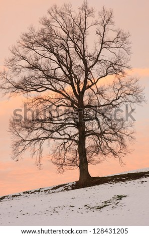 Portrait of a tree in winter with pastel color sky