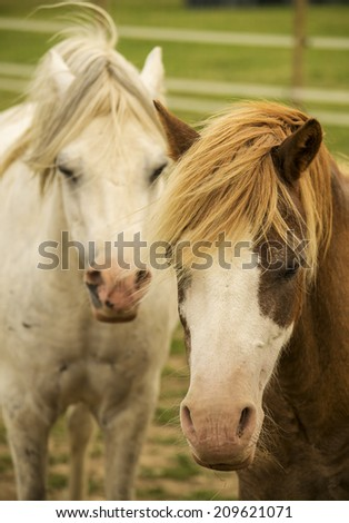 Portrait of a white and brown horse on a field.