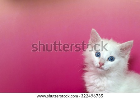 portrait of a white domestic medium hair kitten with blue eyes isolated on a mottled pink and yellow background with copy space for text. Cat looking forward. - stock photo