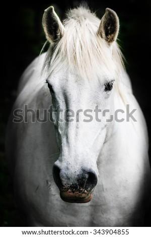 Portrait of a white horse. - stock photo