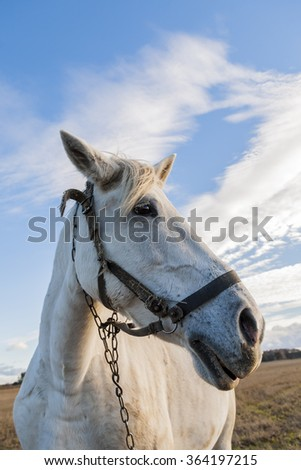 Portrait of a white horse, on a background of blue sky and clouds.