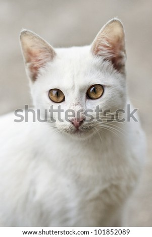 Portrait of a white wildcat - stock photo