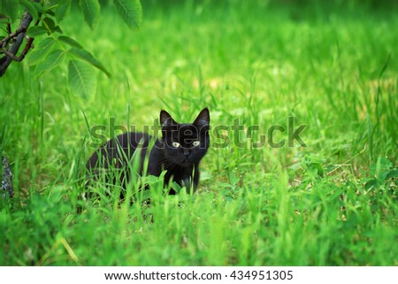 Portrait of a wild black cat in the grass - stock photo