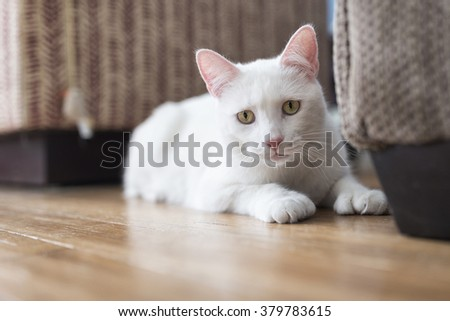 Portrait of a 2-year old male white cat