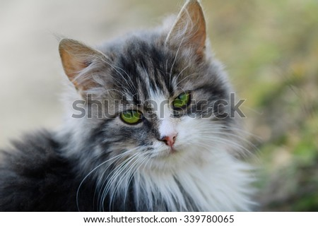 Portrait of a young furry cat - stock photo