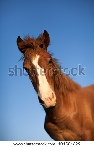 portrait of a young horse with selective focus on blue sky