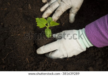 Portrait of a young researcher technician woman in greenhouse,in uniform and seedling pot in her hand. Food production. - stock photo