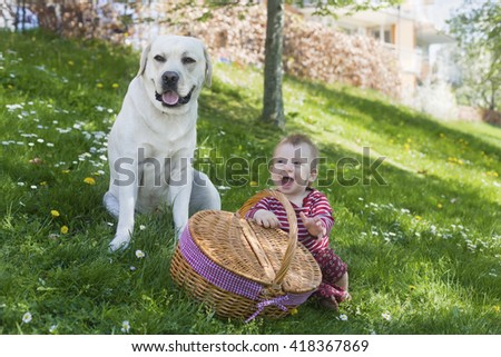 portrait of adorable blond baby toddler sitting in green grass with picnic basket and adult yellow labrador retriever, playing and laughing  - stock photo