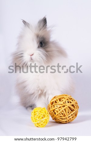 Portrait of adorable bunny with decorations