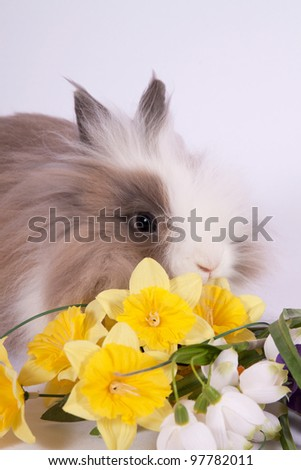 Portrait of adorable bunny with flowers on white background