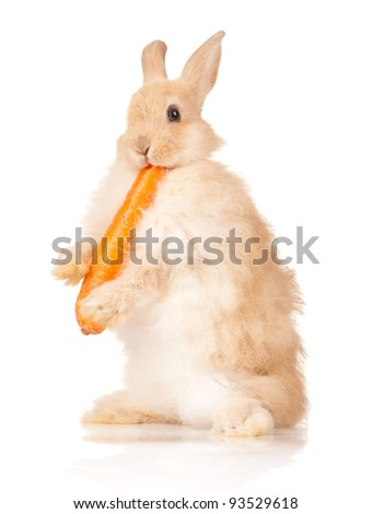 Portrait of adorable rabbit with carrot over white background - stock photo