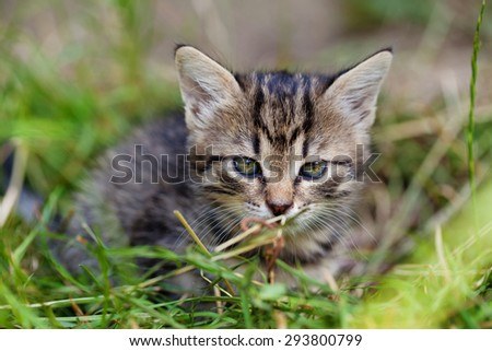 Portrait of adorable young kitten in the grass - stock photo