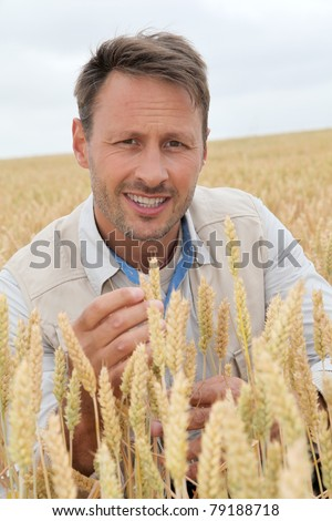 Portrait of agronomist analyzing wheat ears - stock photo