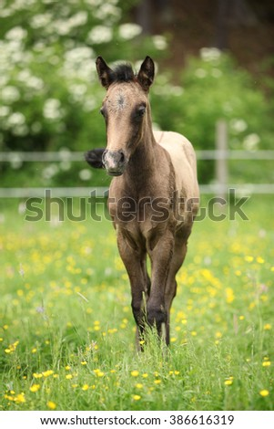 Portrait of amazing brown foal standing on pasturage