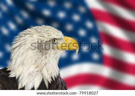 Portrait of American bal eagle against USA flag stars and stripes - stock photo