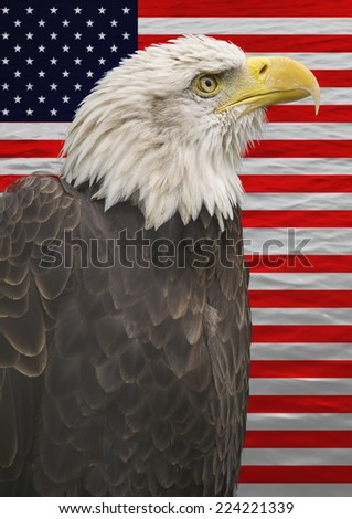 Portrait of an american bald eagle and the american flag. - stock photo