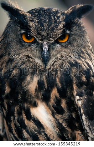 Portrait of an Eagle Owl - stock photo