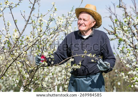 portrait of an elderly man in flowered cherry orchard. Selective focus - stock photo