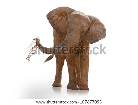 Portrait Of An Elephant Playing On White Background - stock photo