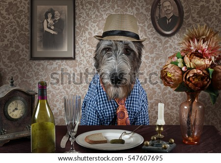 Portrait of an Irish wolfhound in a hat sitting at a table indoors