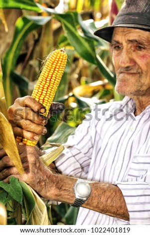 Portrait of an old man harvesting corn