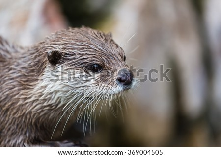 portrait of an otter - stock photo