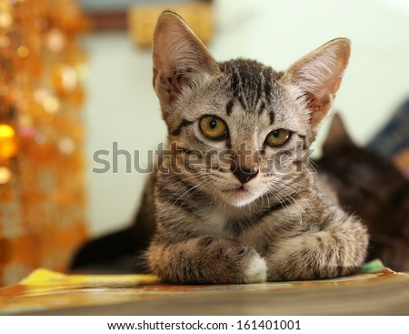 portrait of baby cat - stock photo