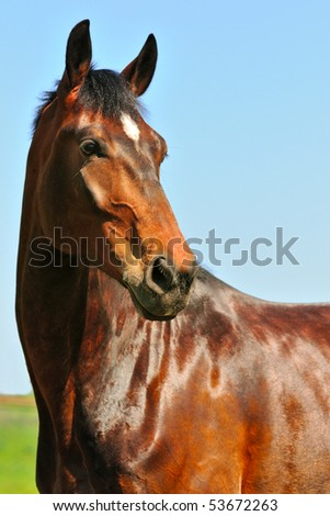 Portrait of bay horse against blue sky - stock photo