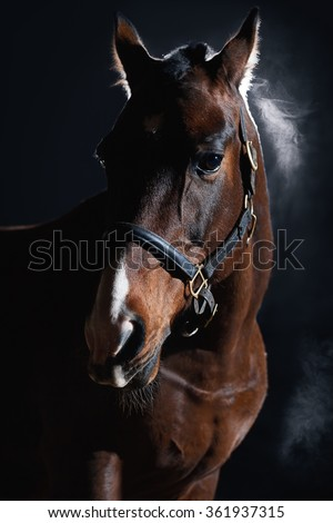 Portrait of beautiful bay horse on dark background